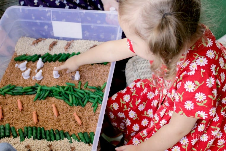 Counting and sorting farm animals in a sensory bin.