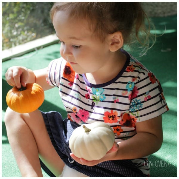Compare and match pumpkins with your preschool in this pumpkin patch sensory bin.