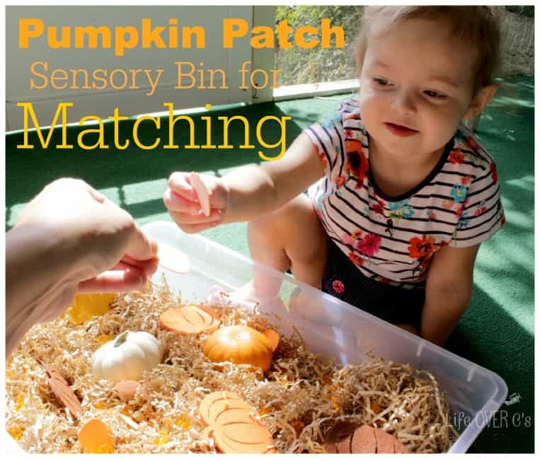 preschooler playing with pumpkin patch sensory bin