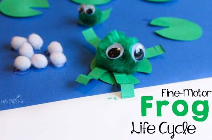 This fine-motor frog life cycle activity is perfect for preschoolers!