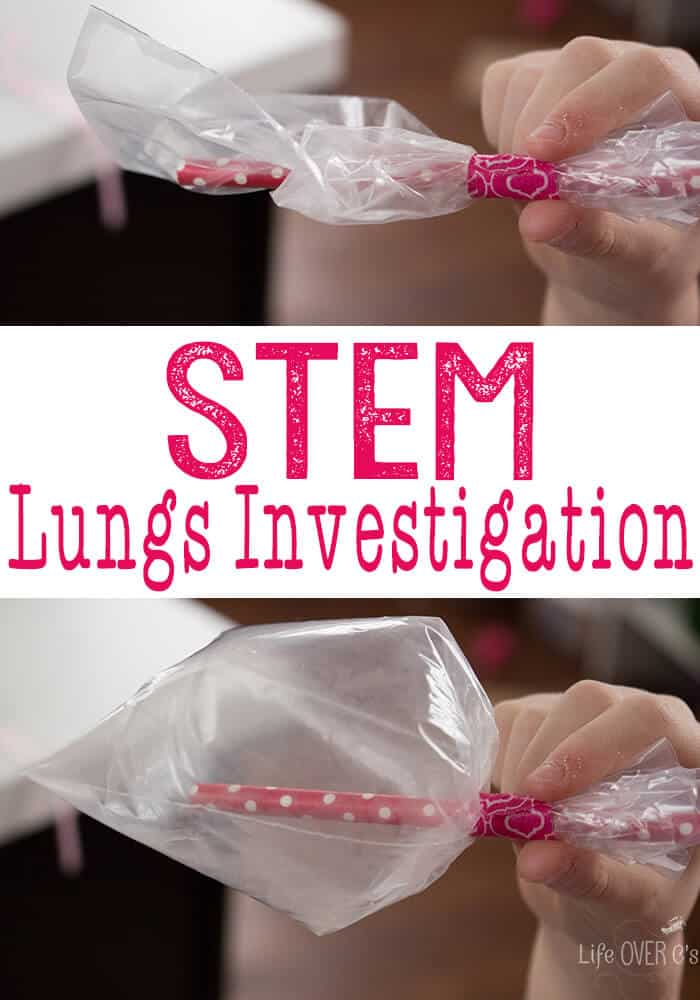 STEM Respiratory System Investigation Asthma versus Healthy