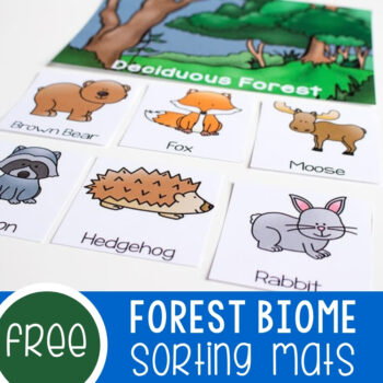 Biome Sorting Mats For Forests Featured Square Image