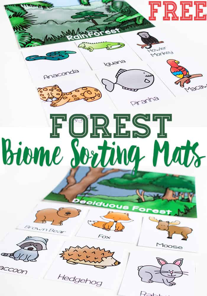 Biome Sorting Mats For Forests