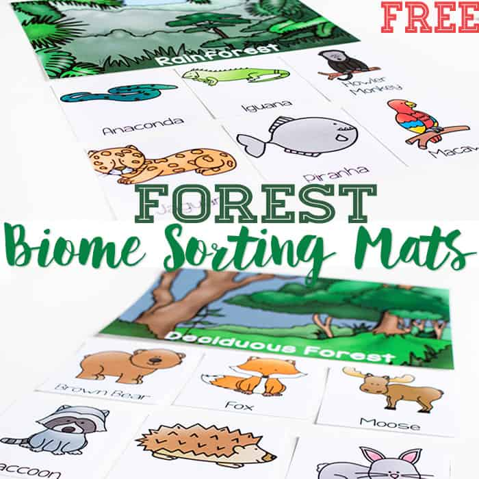 Biome Sorting Mats for Animals