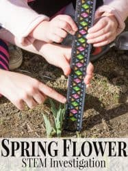 Spring Flower STEM Investigation for Preschoolers