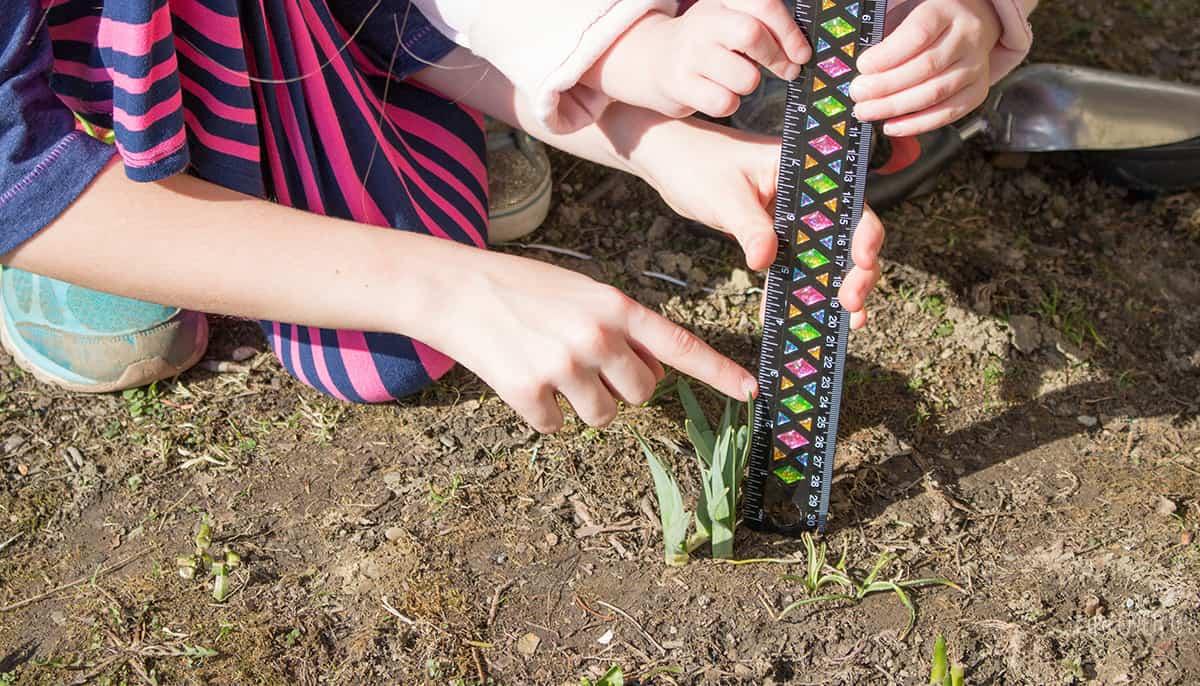 spring-flower-stem-fb