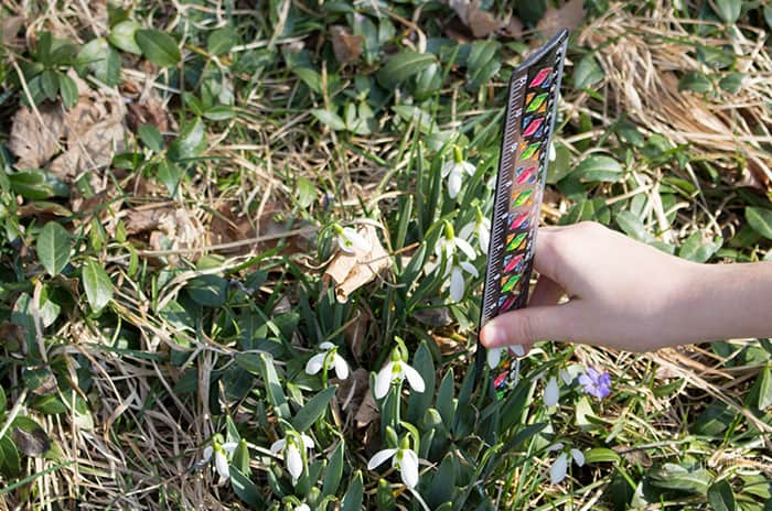 Get out and enjoy the fresh spring air with this fun Spring Flower STEM Investigation for Preschoolers. Combine science, math, art and technology while learning about flowers.
