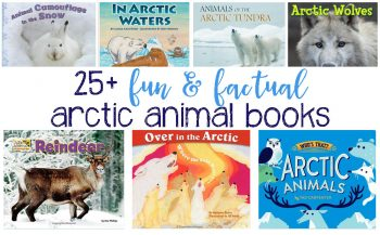 25+ Fun and Factual Arctic Animal Books For Kids