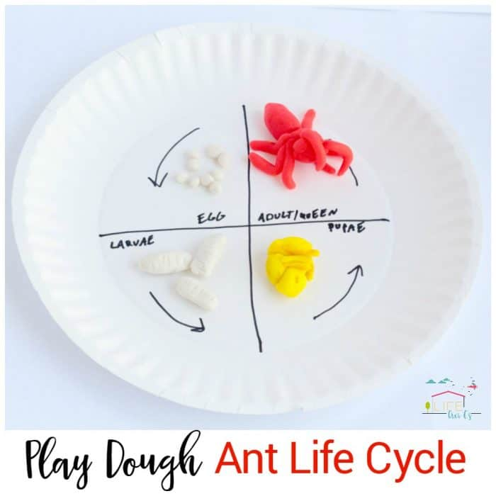 Hands-On Play Dough An...