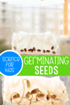 Watching seeds grow in a bag is a great science lesson for kids. Our seed germination in a bag gives kids the opportunity to see up close how a seed grows.