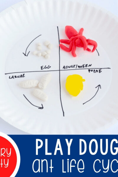 Hands-On Play Dough Ant Life Cycle Activity Featured Square Image