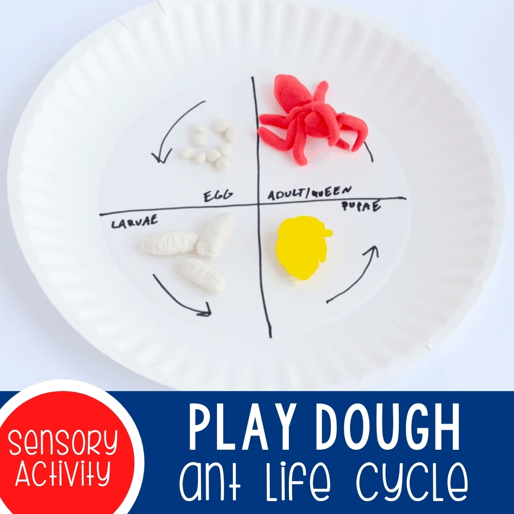 Hands-On Play Dough Ant Life Cycle Activity