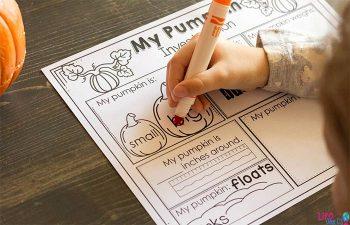 Preschool STEM activity for pumpkins. Preschoolers will discover attributes of pumpkins in a simple STEM activity