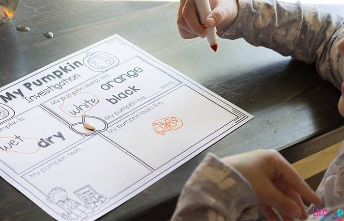 Draw a picture of the inside of a pumpkin on this free printable pumpkin STEM activity for preschoolers