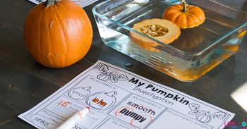 Does a pumpkin float? Preschoolers will discover the answer in this pumpkin STEM activity for preschoolers with a free printable STEM investigation.