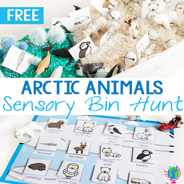 Preschoolers love this arctic animal sensory bin matching game.