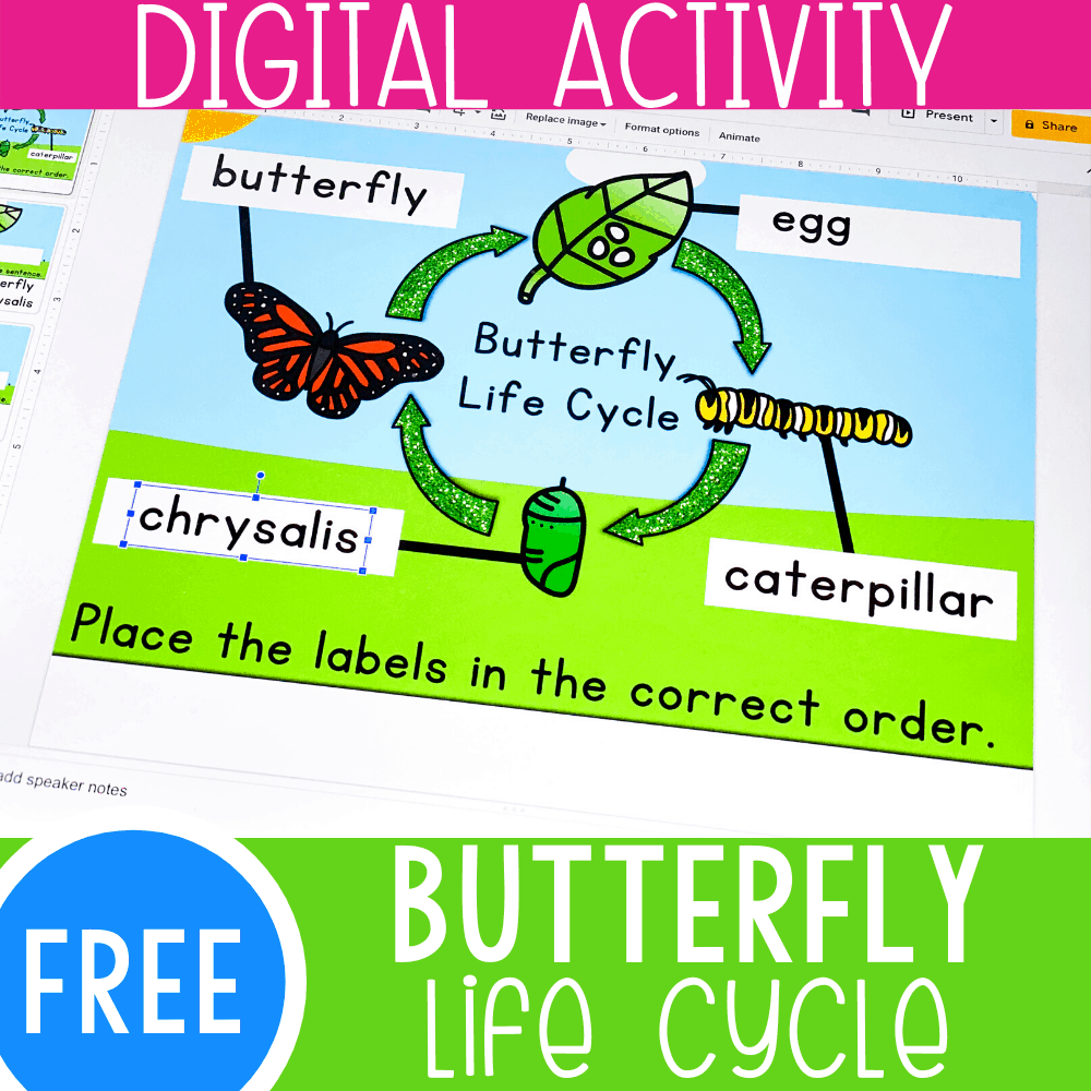 Life Cycle of a Butterfly Activity for Kids