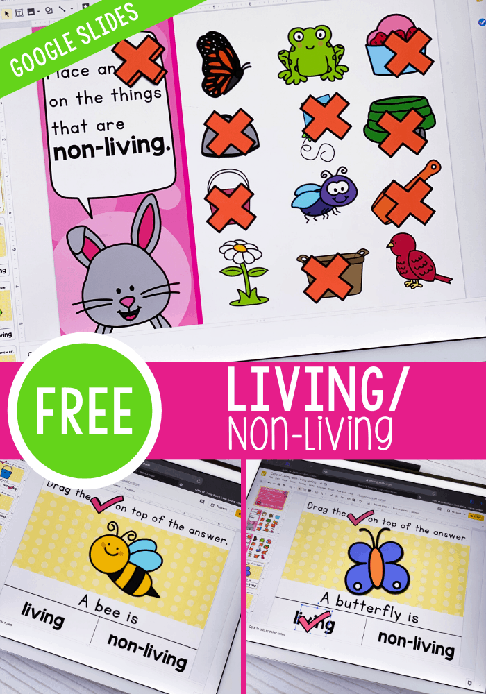 Free Living/Non-Living Things science activity for kindergarten and preschool. Learn about what things are living and what things are non-living with these simple Google Slides and Seesaw activities.