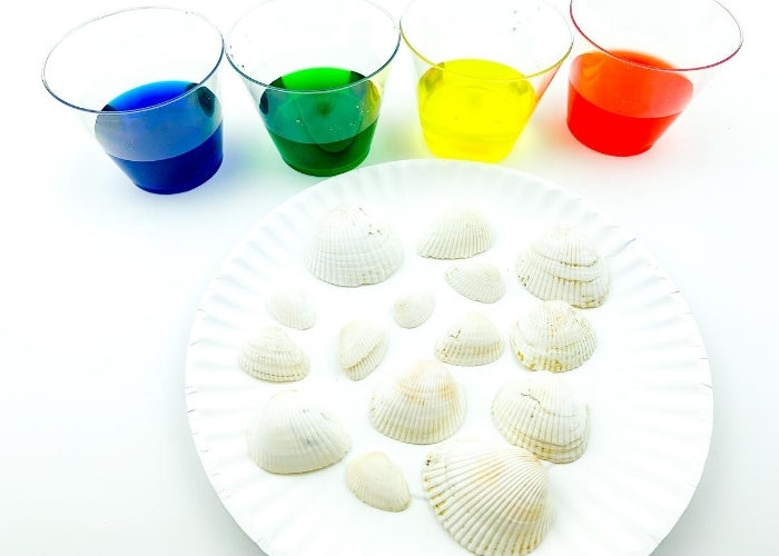 Cups of dye behind a white paper plate with white seashells on it.