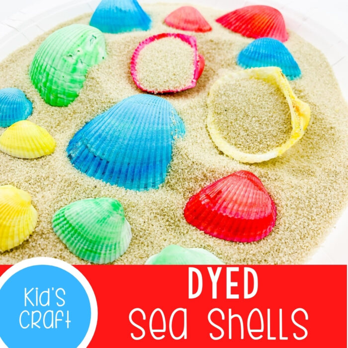 dyed sea shells
