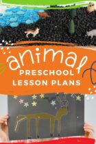 Amazing Animal Preschool Lesson Plans