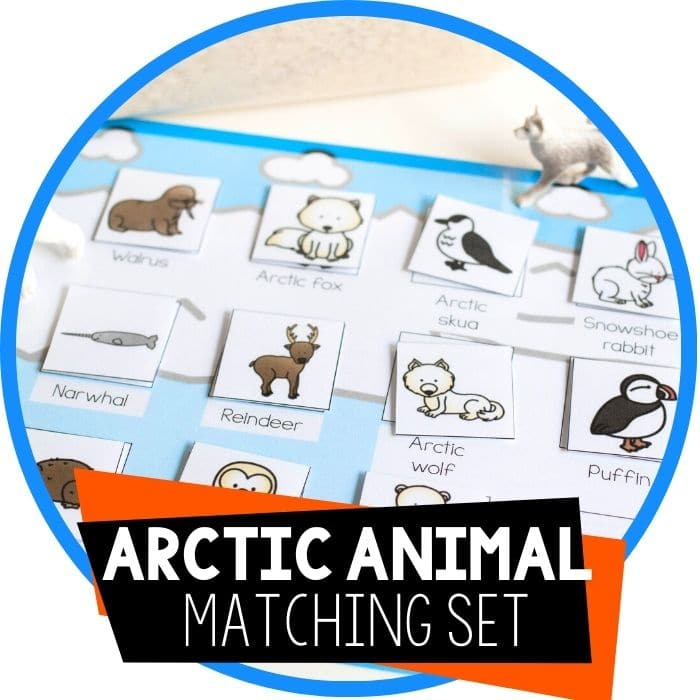arctic animal matching set featured image
