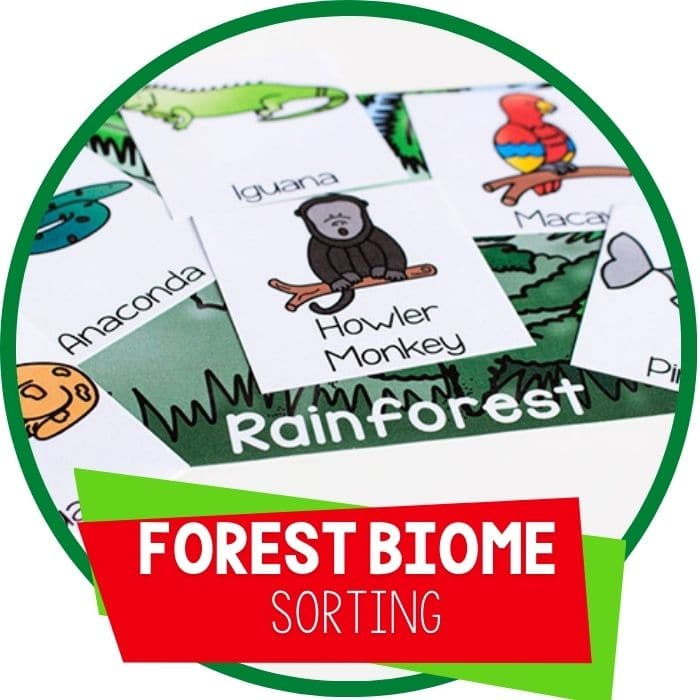 forest biome habitat sorting featured image