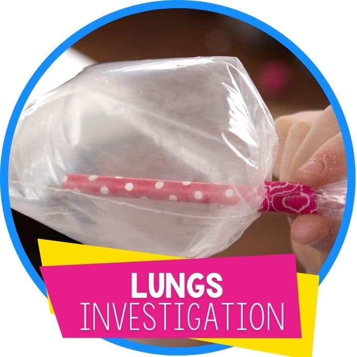 DIY lungs STEM investigation asthma experiment featured image