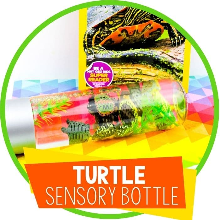 Preschool Turtle Theme Sensory Bottle