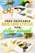 Free Printable Bee Life Cycle for Play Dough