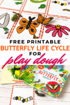 Butterfly Life Cycle for Play Dough
