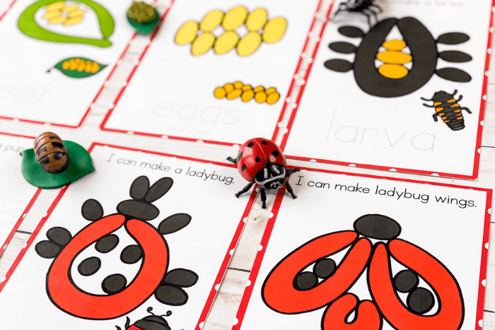 Overhead view of the ladybug life cycle play dough mats printables with ladybug life cycle toys.