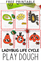 Free Printable Ladybug Life Cycle Play Dough Activity