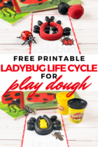 Free Printable Ladybug Life Cycle for Play Dough