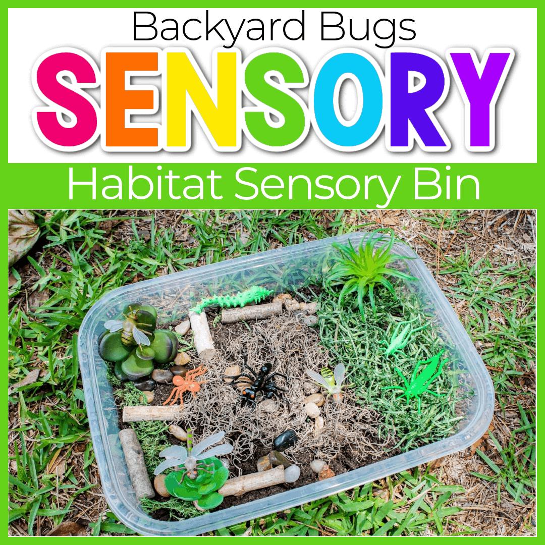 Bug Sensory Bin Activities for Preschoolers
